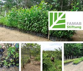 FAMAB Umwelt Stiftung